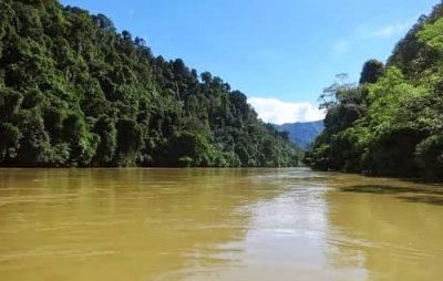 Objek-Wisata-Kalimantan-Utara-Hutan-Lindung-Sungai-Sesayap