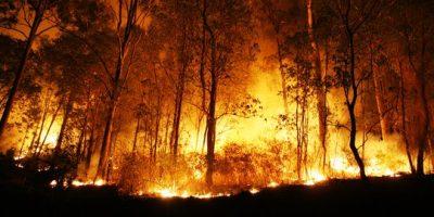 memahami-penyebab-kebakaran-hutan-yang-sering-terjadi-dan-cara-penanggulangannya
