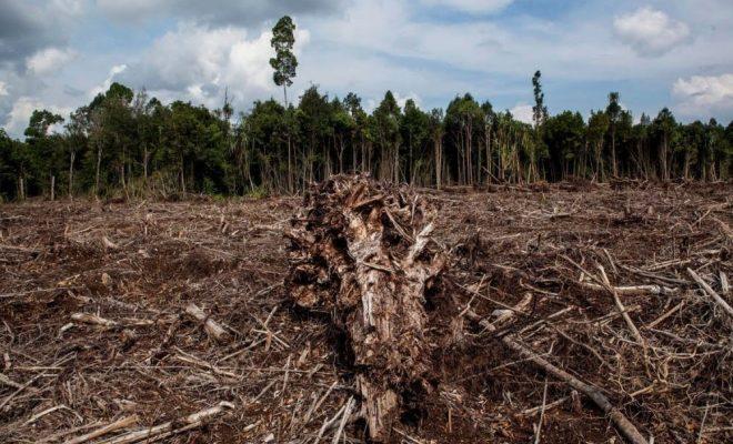 deforestedpeatforest-sumatrajuly2014-uletifansastigetty-web2-f3d80304ef74cdca9b66b3e566a07fc1